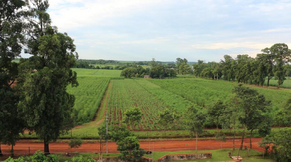 Moringaplantage Original Moringo