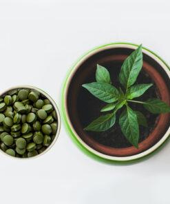 Original Moringo Presslinge mit Pflanze
